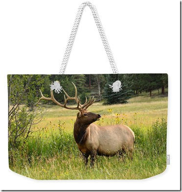 bull-elk-in-wildflowers-tranquil-light-photography (1)